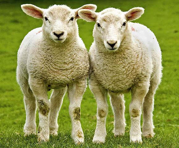 Уэльская мясная индустрия ставит перед собой амбициозные цели
