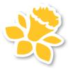 daffodil_100
