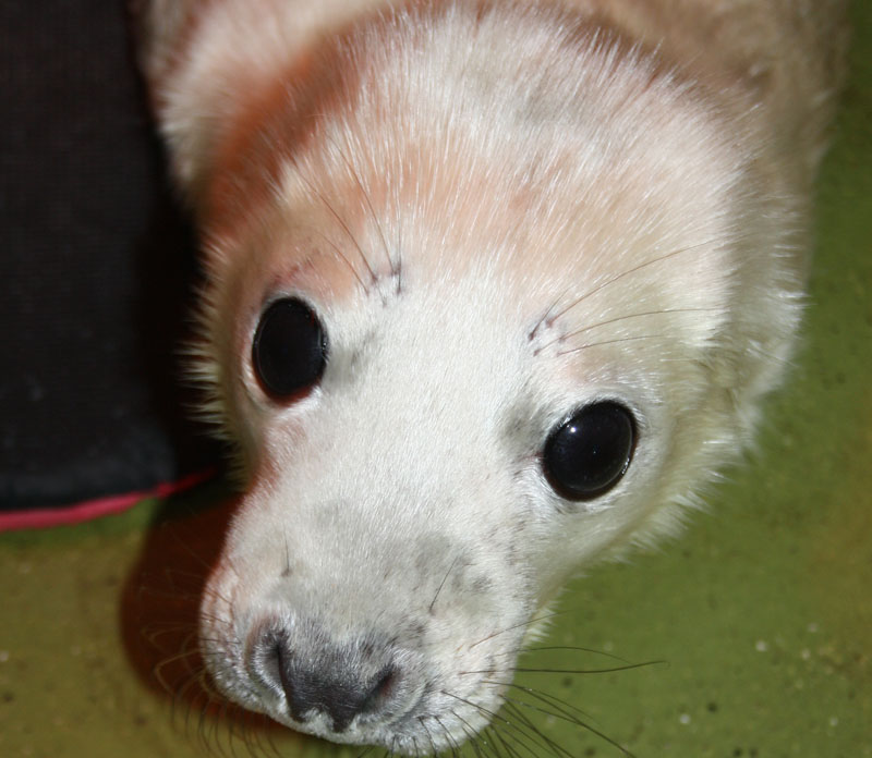 Sealpic1