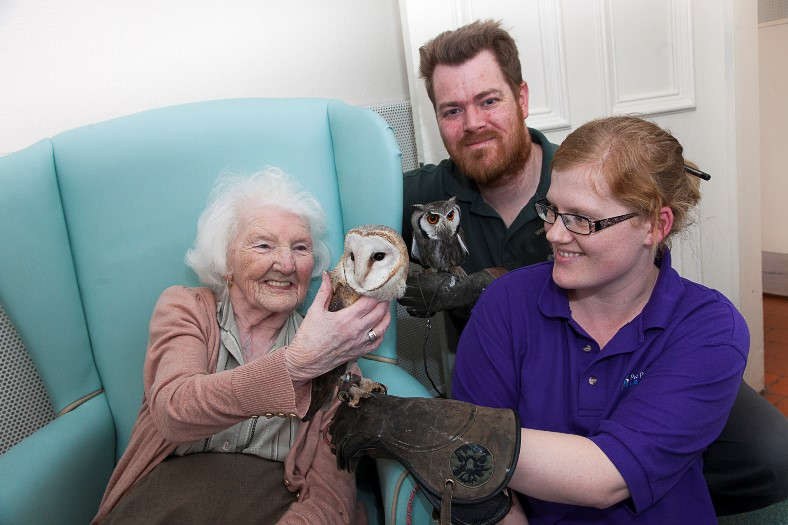 Pendine Park ... Gwern Alyn visit to residents from the Owl Sanctuary . Pictured is resident Marion Jenkins,88 with Malqi the South African Barn owl with Senior Carer Amanda Joseph and Steve Boswell from the Owl sanctary with a White face scops owl.