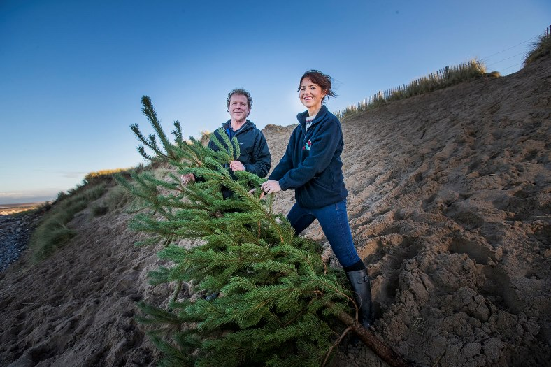St Kentigern Hospice and Denbighshire County Council are urging people to donate their Christmas trees once they've finished with them this year and they're going to be used to reinforce the sand dunes on the north wales Gary Davies from Countryside Services is pictured with Laura Parry (hospice fundraising manager